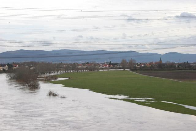 Neckar mit Blick auf Ilvesheim/Seckenheim